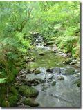 Wales436.jpg