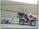 One man and his three dogs on four wheels
