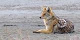 coyote8.jpg