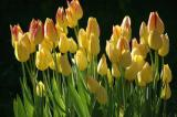 Flowers (many)