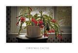 Christmas Cactus3.jpg