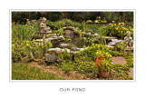 Our Pond.jpg