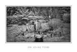 On Joan's Pond