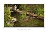 Ducks On Joans Pond