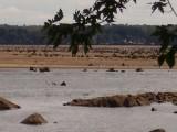 Rocks and stumps