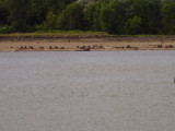 Looking across to where the shallow water bouys are... note the bouy laying between stumps... SHALLOW?? Ya think?