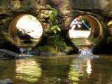 Lovin' the Creek