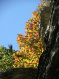 Signs of Autumn at Pilot Mountain