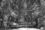 Tomar Park Bike Trail