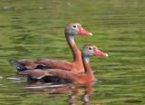 Birds of Quail Valley