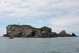 June 28: Bird Island, Kachemak Bay, Alaska