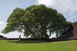 Eun Hee and the Tree