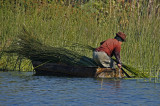 Moving Lake Grass into Boat