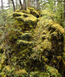 Forêts humides