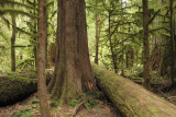 Cathedral Grove