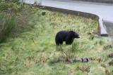 Ours noir attendant les touristes