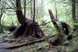 Forêts humides en bordure du Pacifique