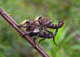 Robberflies