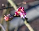 January Spring