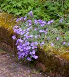 B In the garden April 2009