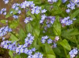 E In the garden  April 2009