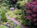 Garden 12 July 2009