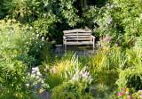 Garden 19-July 2009