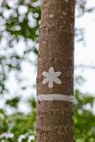 Träd vid Kottlasjö