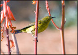 not a hummingbird