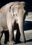 WAP Elephant