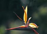 WAP Flower