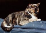 Sun Cat #1