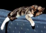 Sun Cat #2