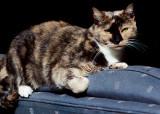 Sun Cat #4