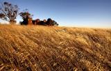 Abandoned Harvest
