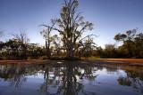 Murray River Backwater