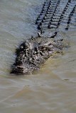 Adelaide River Crocodile
