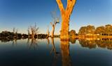 Murray River Billabong
