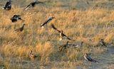 Hornbills are everywhere