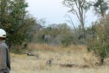 Our guide had to convince the elephants that they were not invited!