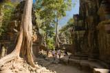 Ta Prohm Temple Complex where the jungle's presence can still be seen