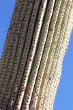 071_Tucson.JPG