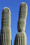 072_Tucson.JPG