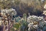 090_Tucson.JPG