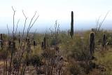 117_Tucson.JPG