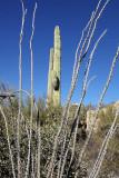 119_Tucson.JPG