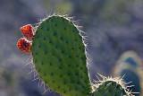 168_Tucson.JPG
