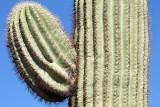 170_Tucson.JPG