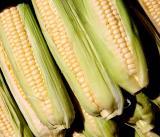 A-maiz-ing or just corn-y