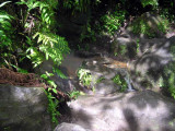 Hot Pools at Trafalgar Falls